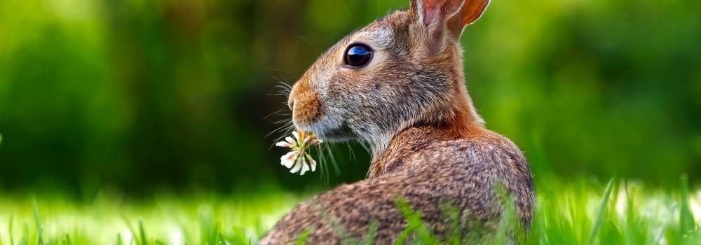 Le maquillage minéral Eugénie Prahy n'est pas testé sur les animaux